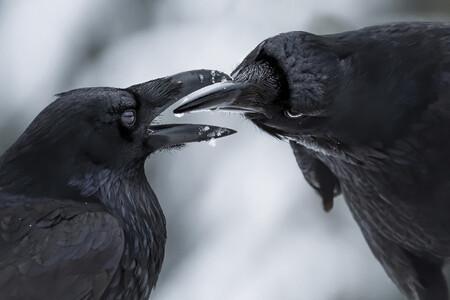 C Shane Kalyn Wildlife Photographer Of The Year