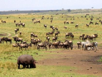 De safari por Africa (resumen)