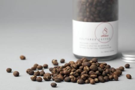 Un mejor café gracias a la química bacteriana