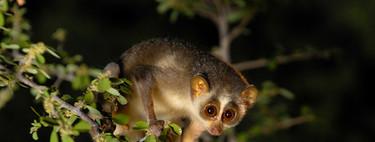Los 7 animales raros más buscados por los cazadores