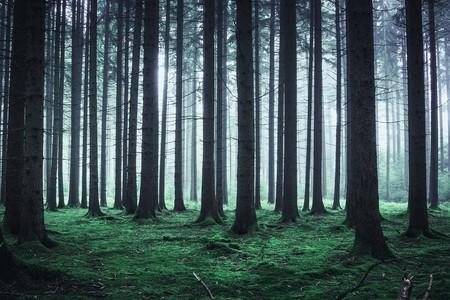 Bosque Niebla Siluetas