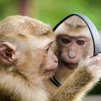 """Ciencia española 'made in China': las primeras quimeras humano-mono se han fabricado en China porque """"aquí no se pueden hacer"""""""