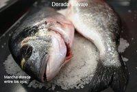 Conociendo pescados I: la dorada y el sargo