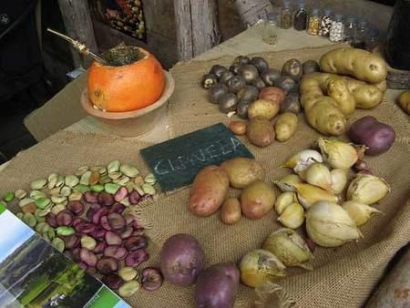 Alimentos transgénicos en nuestra dieta, el eterno dilema