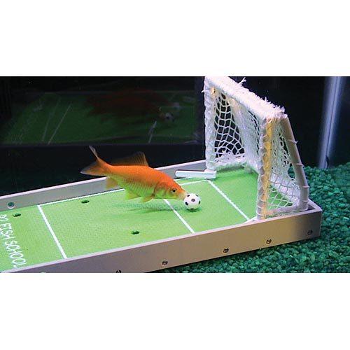 Adiestramiento para peces