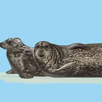 Siete cuerpos de lobos marinos han sido hallados sin vida en Mazatlán, México, y nadie sabe las razones