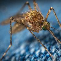 La lucha contra los mosquitos en verano: esto es lo que realmente funciona para librarte de las picaduras