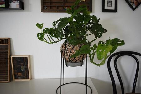 La técnica de decoración japonesa kokedama es perfecta para llenar nuestra casa de plantas: estas 25 ideas nos ayudan a empezar