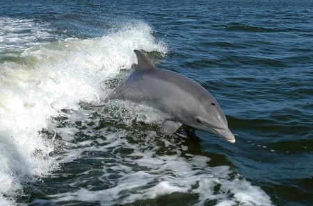 Dolphin 386744 960