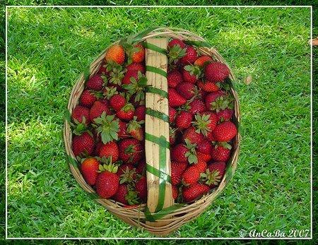 Recolectar fruta en lugar de comprarla en el mercado. Todo es posible en Suecia