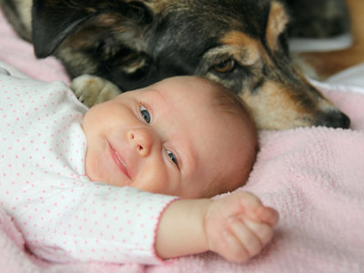 Cómo preparar a tu perro para la llegada del bebé: nueve consejos para que el primer encuentro entre ambos sea maravilloso