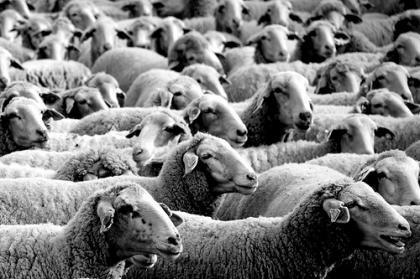 Churras y merinas: el caso Lehman