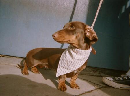 Zara Mascotas 13