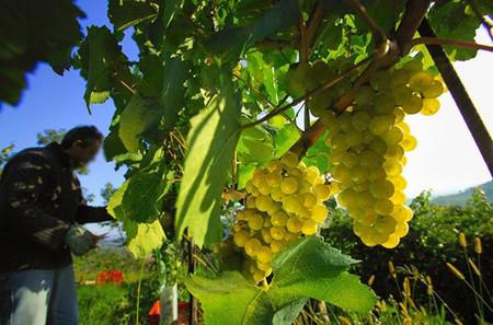 Aceite de pepitas de uva para tratar las arrugas