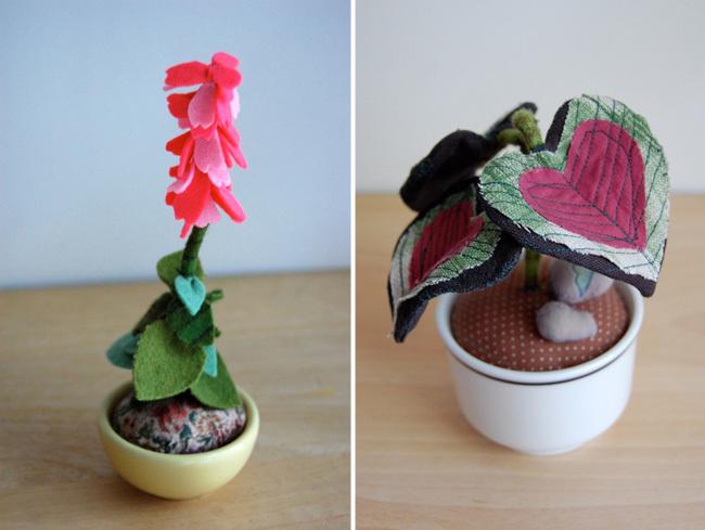 plantas de peluche 2