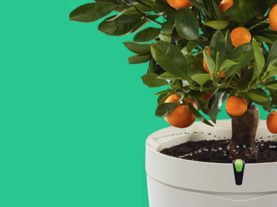 Esta es la maceta inalámbrica Parrot Pot que te ayuda a cuidar las plantas de casa