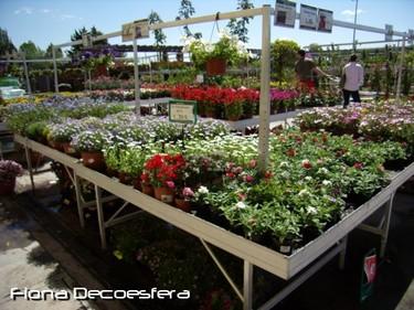 Consejos útiles a la hora de comprar plantas