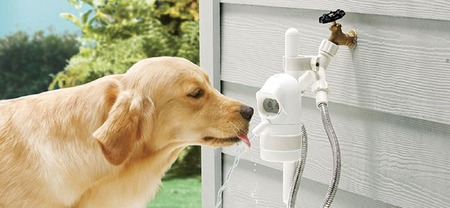 Un bebedero automático para que tu perro no pase sed