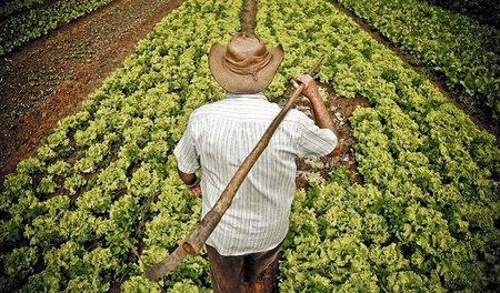 La crisis abre una lucha entre los recolectores agrícolas nacionales y extranjeros