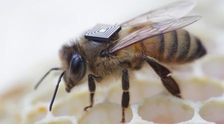Intel Edison podría ayudar a solucionar el grave colapso de colonias de abejas