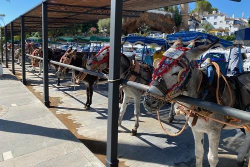 Actividades en la Costa del sol: un paseo en burro-taxi en Mijas