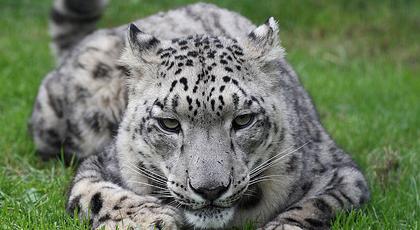 ¿Y qué es eso de Snow Leopard?