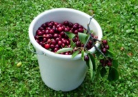 Errores en la información de salud (I): Cherry picking, dando valor a pruebas incompletas