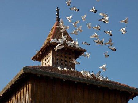 Francia: Ruta por los palomares del Tarn