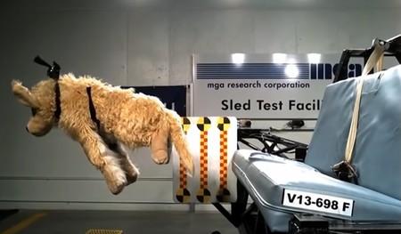 Estas son las consecuencias de no llevar a tu mascota correctamente sujeta en el coche (y la multa que conlleva)