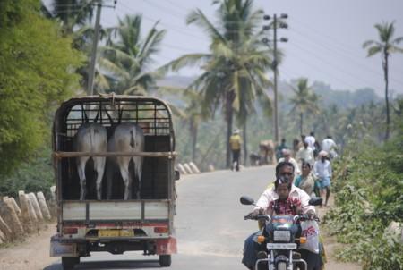 India, donde no deberías esperar ayuda de nadie si sufres un accidente de tráfico (y esta es la razón)