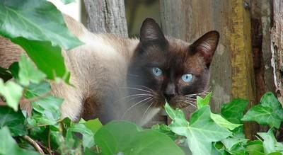 Tu gato, cazador de redes WiFi