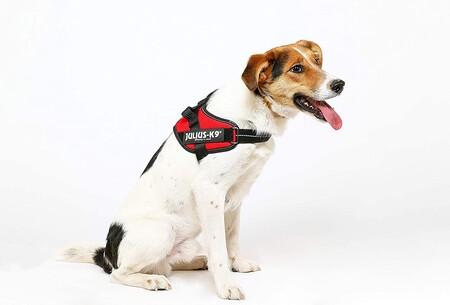 El arnés para perros más vendido de Amazon tiene miles de valoraciones positivas y un descuento brutal: llévatelo por 12,90 euros