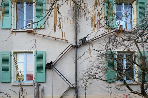 Berna y el espectáculo de las escaleras para gatos