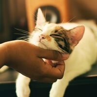 Sabemos muy poco de la inteligencia de los gatos. Siempre hacen perder la paciencia a la ciencia