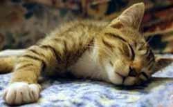 Ronroneo de gato para dormir al bebé