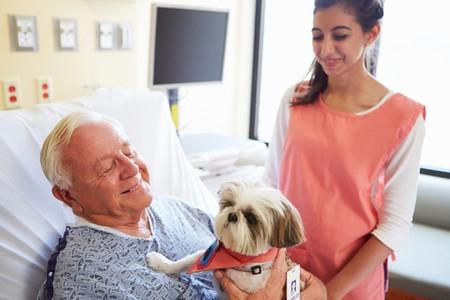 En el Día Mundial de los Animales nos preguntamos: ¿mejoraría la salud de los enfermos si pudieran visitarlos sus mascotas?