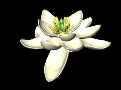 Este es el aspecto de la flor más antigua del mundo, lo descubrieron investigadores de la UNAM