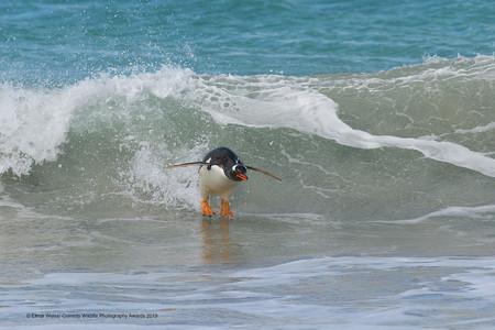 Elmar Weiss Surfing South Atlantic Style 00004430