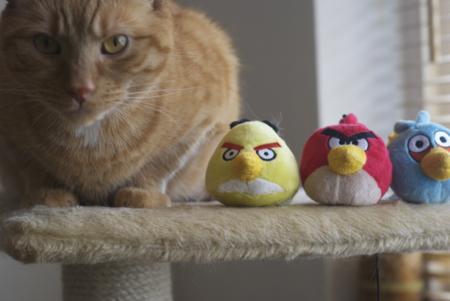 El juego Angry Birds, la exhausta gallina de los huevos de oro