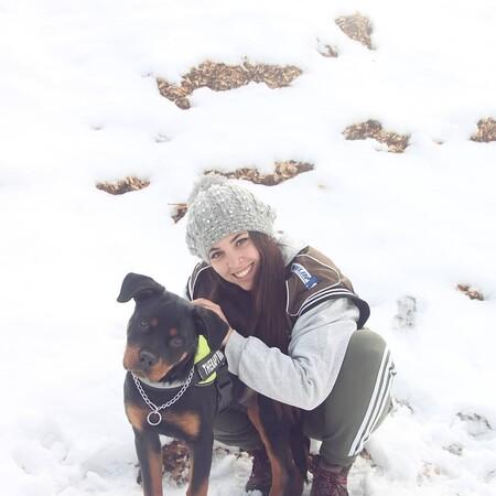 custodia compartida de perros, mascotas y animales de compañia