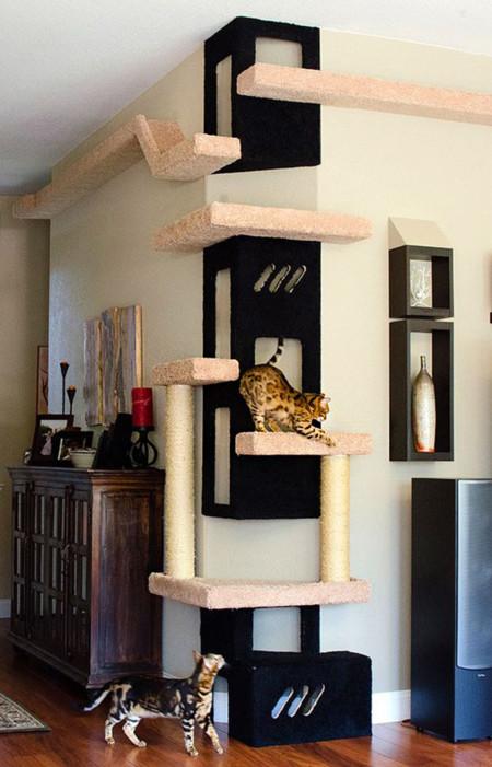 Gatos Rincon 6