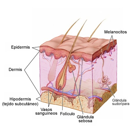 Anatomy The Skin Nci Visuals Online Esp