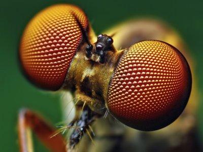 A los drones les salen ojos de insecto, una idea que podría evitar colisiones entre ellos