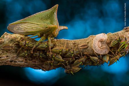 Javier Aznar Gonzalez De Rueda Wildlife Photographer Of The Year 02