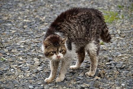 mordedura de gato