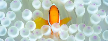 Estas son las mejores fotos submarinas de 2018 según el Ocean Art Underwater Photo Competition