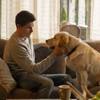 'Upload' tendrá temporada 2: Amazon renueva el cielo virtual del creador de 'The Office'