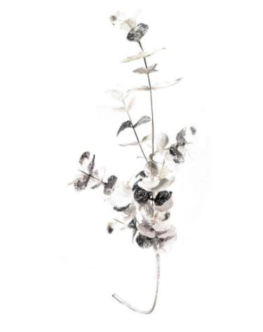 Rama de eucalipto blanca y plateada