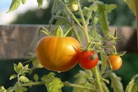 El interior de tu próximo coche podría estar hecho de tomates