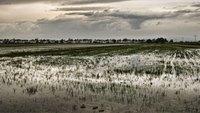 Delta del Ebro, un vergel gastronómico